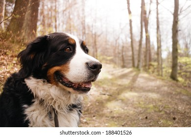 Portrait of dog in the forest, sunshine, vintage