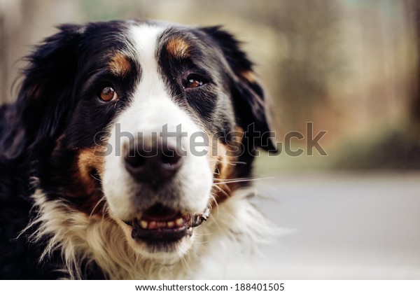 Portrait Dog Forest Sunshine Vintage Stock Photo Edit Now