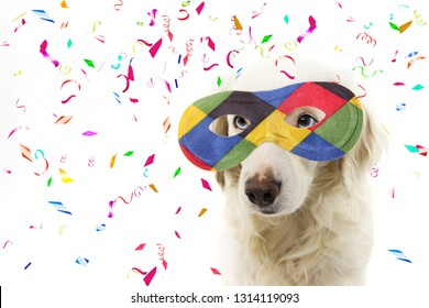 PORTRAIT DOG HARLEQUIN CARNIVAL MASK. FUNNY MIXED-BREED PUPPY WEARING A COLORFUL MASQUERADE. ISOLATED STUDIO SHOT ON WHITE BACKGROUND WITH CONFETTI FALLING.