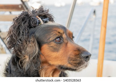 Portrait of dog looking away, with a cannibal hairstyle on the head made with his ears