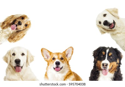 Portrait of a dog looking at the camera on a white background