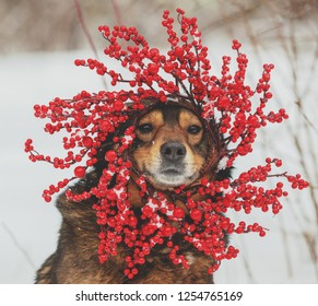 Portrait of a dog outdoors in winter. The dog  wearing red Christmas wreath.