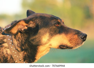 portrait of a dog in profile