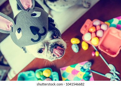 Portrait of dog with rabbit hat on table with Easter eggs.