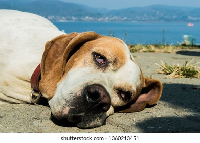 Portrait of a dog resting on the pavement on a sunny day.