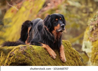 portrait of dog is resting on the rock