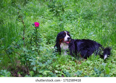 Portrait of a dog sitting next to a pink flower in the forest