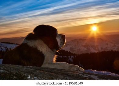 Portrait of dog sitting on the mountains and sea background in winter at sunset