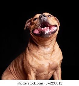 Portrait of a dog, studio shot