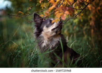 Portrait dog in the vineyards in autumn at sunset