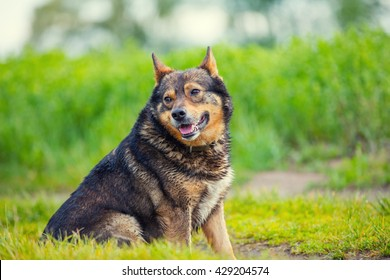 Portrait of dog walking on the meadow