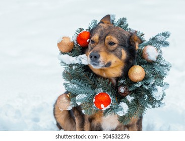 Portrait of a dog wearing christmas wreath  sitting outdoors in snow