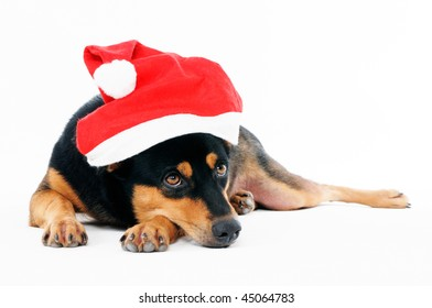 Portrait of a dog wearing Santa hat over white background.