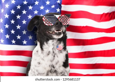 Portrait Of A Dog Wearing Sunglasses And Badge In Front Of American Flag