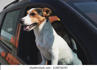 Portrait of dog while looking through car's window