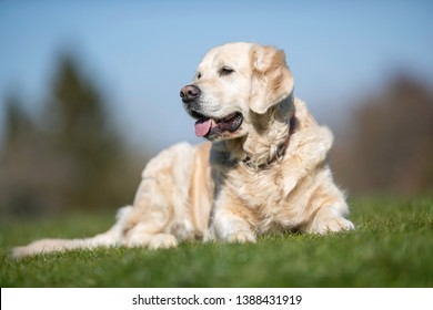 Portrait of a dog in the wild