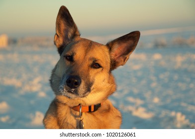 portrait of a dog in winter against a background of snow in the sun