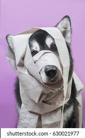 portrait of a dog wrapped in toilet paper