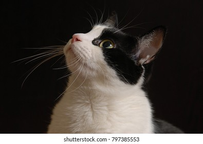 Portrait of a domestic cat on a dark background
