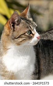 Portrait of a domestic cat photographed outdoors on a sunny day