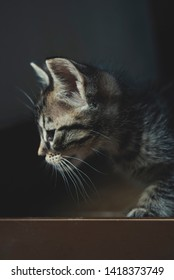 Portrait of domestic kitten at the entrance to the house