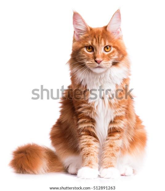 Péro v těsné kočička