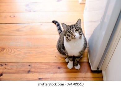 portrait of domestic tabby cat on floor