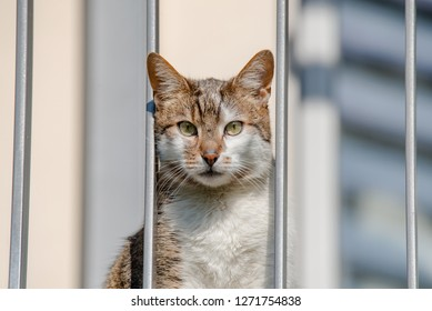 Portrait of domestic unhappy cat looking through balcony, lacking activity locked indoor