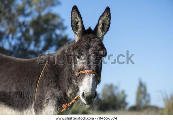 portrait of a donkey