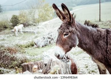 Portrait of a donkey in a field