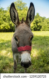 Portrait of donkey on the meadow