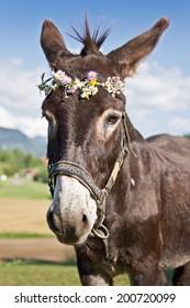 Portrait of a donkey wearing a flower wreath