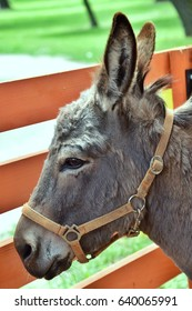 Portrait of donkey's head