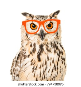 Portrait of an eagle owl with orange glasses seen from the front on a white background