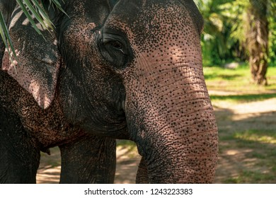 Portrait of an elephant in the jungle of Thailand