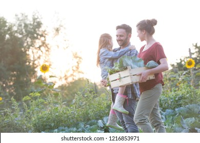 Portrait of a family of famers carrying their vegetables home in wooden boxes, at the end of the day, the Father is carrying their daughter
