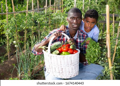 Portrait farmer and son with harvest of tomatoes, bell pepers and parsley from the garden