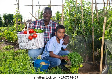 Portrait farmer and son with harvest of tomatoes, bell pepers and parsley from the garden. High quality photo