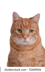 A Portrait of a Fat, Orange Tabby Cat Sitting, Isolated on White