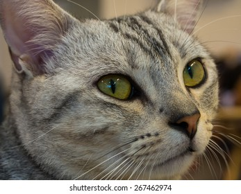 portrait of female cat