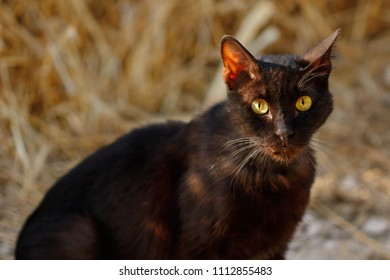 Portrait of feral black-brown cat in the countryside. Photography of nature and wildlife.