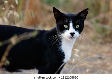 Portrait of feral black-white cat in the countryside. Photography of nature and wildlife.