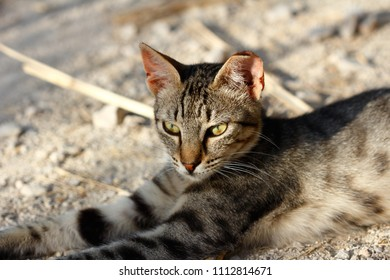 Portrait of feral brown-grey striped cat in the countryside. Photography of nature and wildlife.