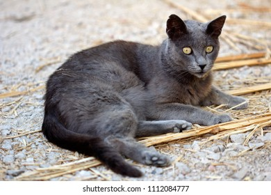 Portrait of feral grey-blue cat in the countryside. Photography of nature and wildlife.