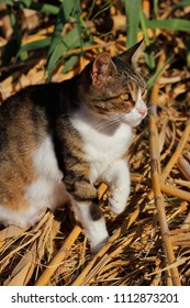 Portrait of feral multicolored cat in the countryside. Photography of nature and wildlife.