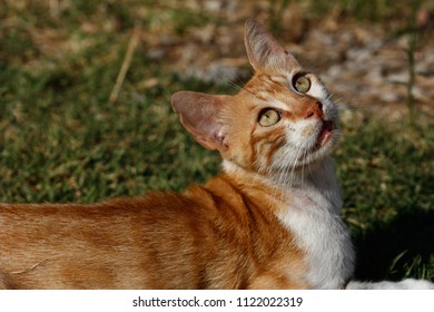 Portrait of feral red-white young cat in the countryside. Photography of nature and wildlife.