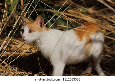 Portrait of feral white-orange cat in the countryside. Photography of nature and wildlife.