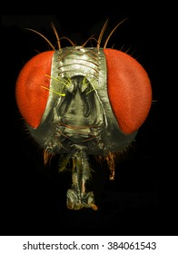 Portrait of a fly: correlative macro photography and scanning electron microscopy.