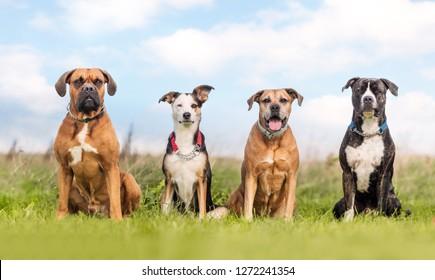 portrait of four dogs