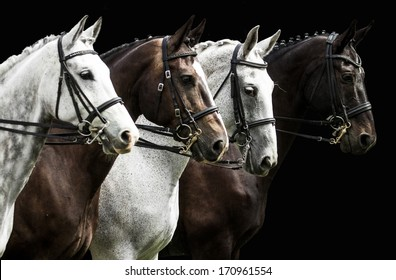 Portrait of  four horses in dressage competition isolated on black